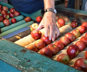 It's APPLE time in the Ozark's and at Vanzant's.