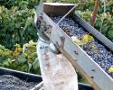 Do you know what this machine is used for? Yes, its a GRAPE PICKER. This machine is very efficient in picking our concords for the winery.