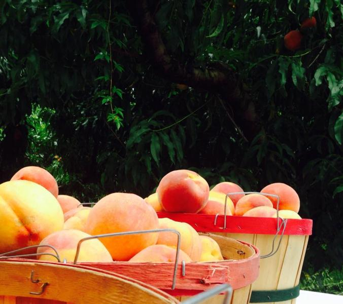 [Image: Fresh peaches are now available at Vanzant Fruit Farms. ]