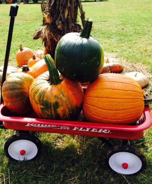 [Image: It's a beautiful weekend to pack your wagon with Vanzant pumpkins! See you Saturday]